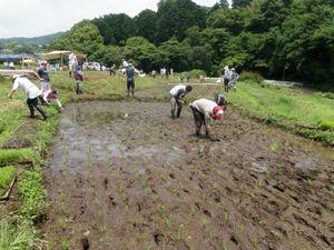 田植え2010.jpg